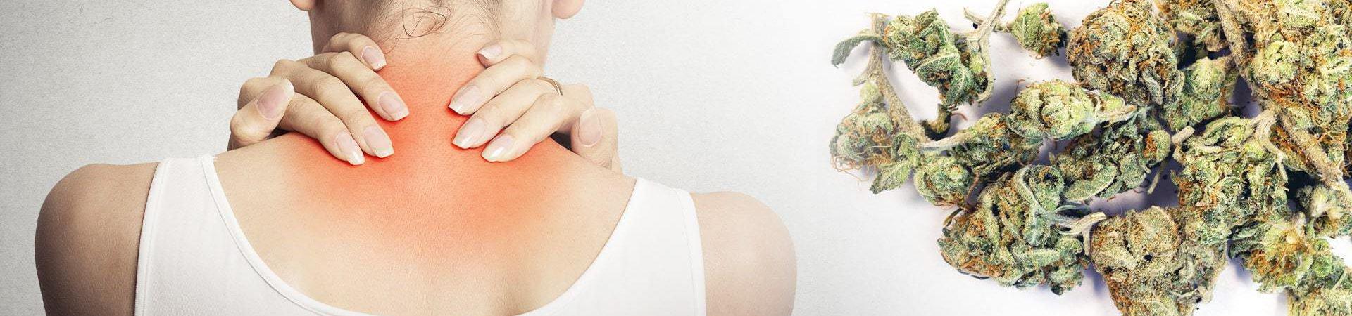 best cbd strains for fibromyalgia